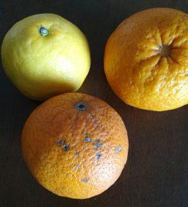 3月20日柑橘類たわわに届く、ありがたい